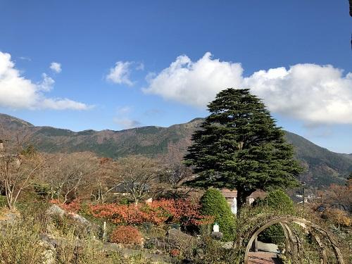 強羅公園のヒマラヤ杉と景色