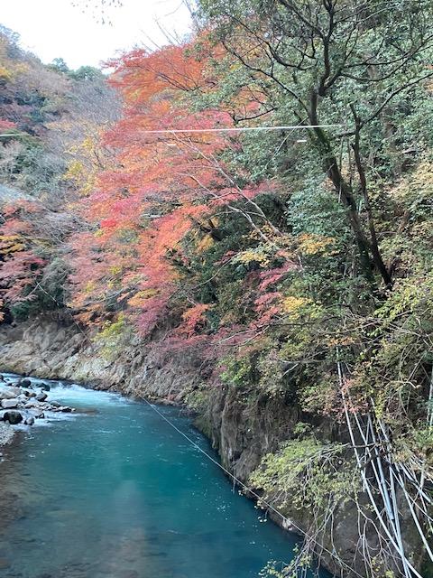 箱根湯本 紅葉