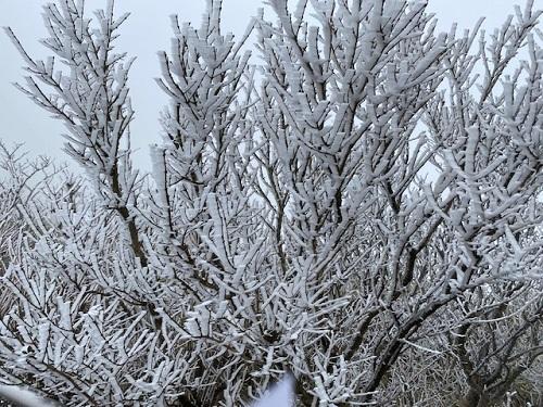 駒ヶ岳山頂 樹氷